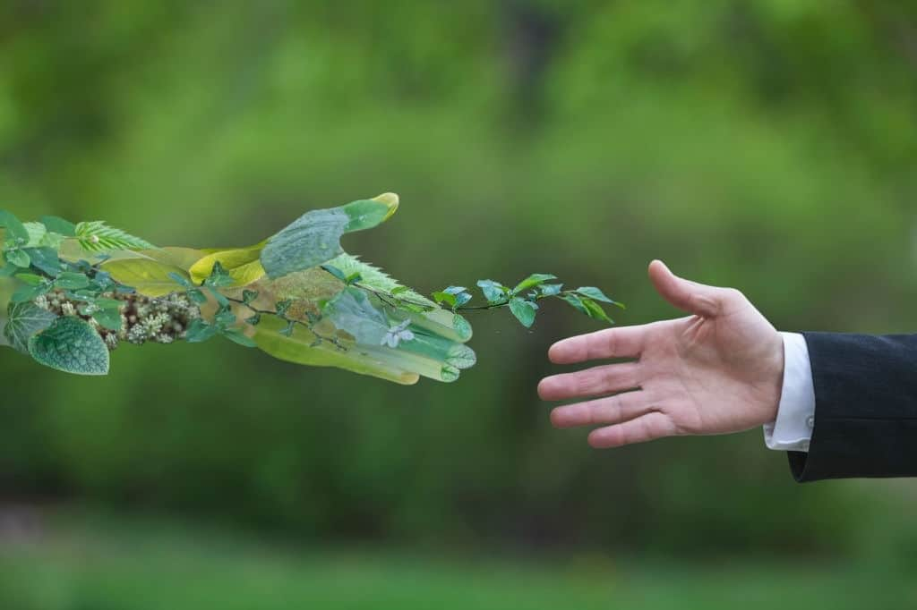 e-commerce ecologico